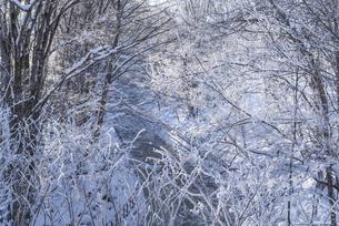 霧氷の川の写真素材 [FYI04742540]