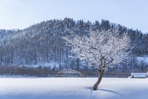 霧氷に覆われた木の写真素材 [FYI04742566]