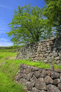 日野江城跡の写真素材 [FYI04742582]