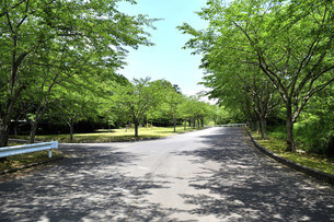緑鮮やかな遊歩道の写真素材 [FYI04742786]