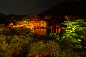【香川県 高松市】秋の夜間ライトアップの栗林公園 日本庭園の写真素材 [FYI04742796]