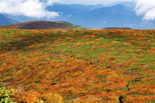 栗駒山(須川岳)の紅葉の写真素材 [FYI04742851]