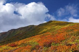 栗駒山(須川岳)の紅葉の写真素材 [FYI04742853]