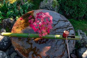 京都市 圓光寺の紅葉の写真素材 [FYI04742858]