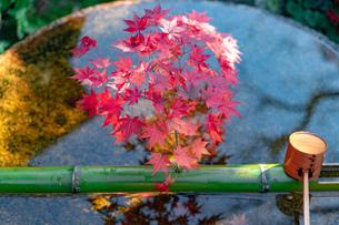 京都市 圓光寺の紅葉の写真素材 [FYI04742859]
