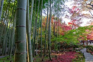 京都市 圓光寺の紅葉の写真素材 [FYI04742860]