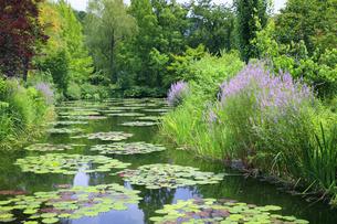 高知県のモネの庭マルモッタン 水の庭の写真素材 [FYI04743048]