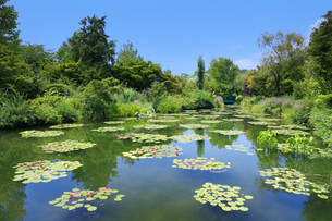 高知県のモネの庭マルモッタン 水の庭の写真素材 [FYI04743053]