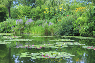 高知県のモネの庭マルモッタン 水の庭の写真素材 [FYI04743054]