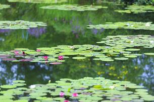 高知県のモネの庭マルモッタン 水の庭の写真素材 [FYI04743055]