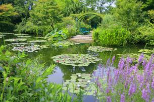 高知県のモネの庭マルモッタン 水の庭の写真素材 [FYI04743056]
