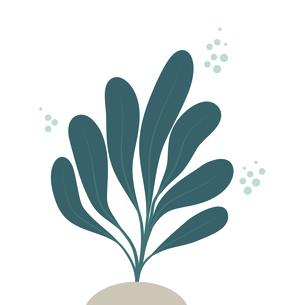 海藻 イラストのイラスト素材 [FYI04743058]