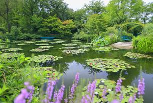 高知県のモネの庭マルモッタン 水の庭の写真素材 [FYI04743059]