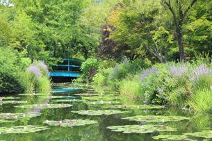 高知県のモネの庭マルモッタン 水の庭の写真素材 [FYI04743060]
