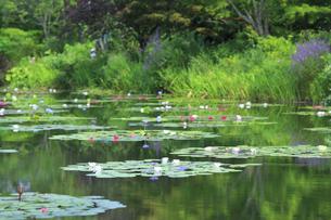 高知県のモネの庭マルモッタン 水の庭の写真素材 [FYI04743062]