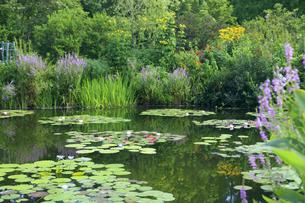 高知県のモネの庭マルモッタン 水の庭の写真素材 [FYI04743063]