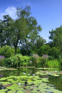 高知県のモネの庭マルモッタンの写真素材 [FYI04743067]