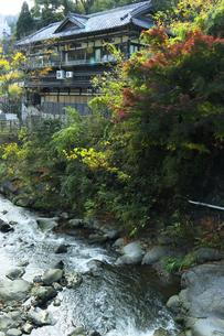湯河原温泉 秋の千歳川に立ち並ぶ旅館の写真素材 [FYI04743215]