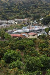 湯河原温泉 オレンジラインから眺めた東海道新幹線とみかん畑の写真素材 [FYI04743226]