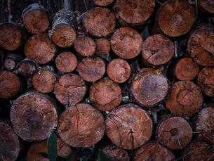 薪の写真素材 [FYI04743329]