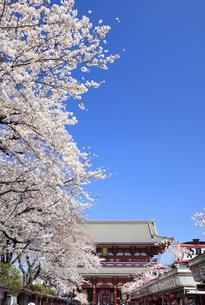 桜と浅草寺の写真素材 [FYI04743354]