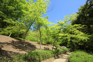 新緑の六義園の写真素材 [FYI04743370]