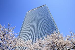 赤坂Bizタワーと桜の写真素材 [FYI04743383]