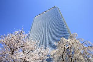 赤坂Bizタワーと桜の写真素材 [FYI04743384]