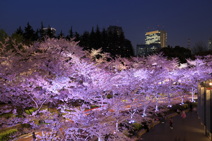 東京ミッドタウンの桜のライトアップの写真素材 [FYI04743388]
