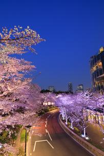 東京ミッドタウンの桜のライトアップの写真素材 [FYI04743390]