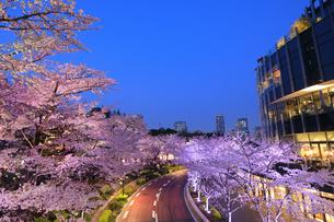 東京ミッドタウンの桜のライトアップの写真素材 [FYI04743391]