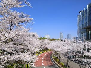 東京ミッドタウンの桜並木の写真素材 [FYI04743392]