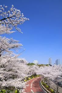 東京ミッドタウンの桜並木の写真素材 [FYI04743393]