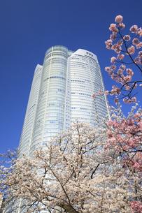 六本木ヒルズと桜の写真素材 [FYI04743398]