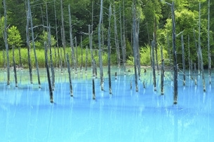 白金青い池の写真素材 [FYI04743527]