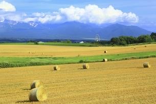 麦稈ロールと十勝岳連峰の写真素材 [FYI04743577]