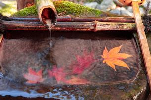 京都市の紅葉の写真素材 [FYI04743662]