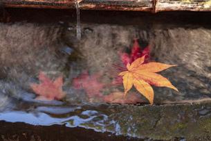 京都市の紅葉の写真素材 [FYI04743663]