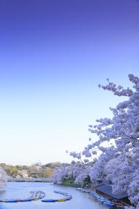 千鳥ヶ淵の桜の写真素材 [FYI04743860]