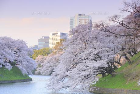 千鳥ヶ淵の桜の写真素材 [FYI04743864]