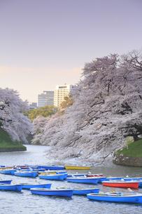 千鳥ヶ淵の桜の写真素材 [FYI04743865]