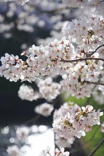 九段の桜の写真素材 [FYI04743896]