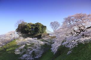 九段の桜の写真素材 [FYI04743899]