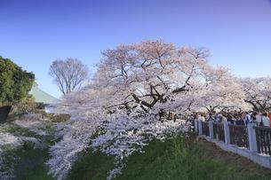 九段の桜の写真素材 [FYI04743900]
