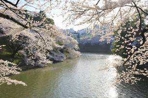 九段の桜の写真素材 [FYI04743901]