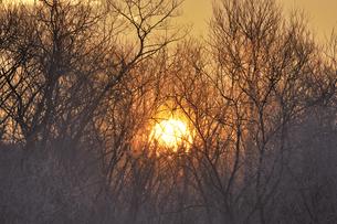 朝陽と樹氷(北海道・鶴居村)の写真素材 [FYI04744098]
