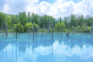 美瑛町 青い池の写真素材 [FYI04744146]
