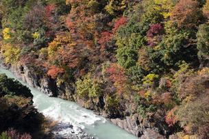 新接岨(せっそ)大橋から見る大井川と渓谷の紅葉の写真素材 [FYI04744254]