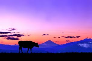 朝焼けの空に富士山のシルエットを背景に、高原の牧場を歩く牛のシルエットの写真素材 [FYI04744382]