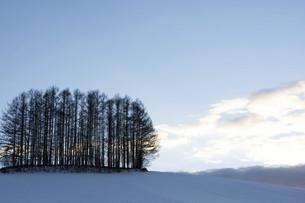 雪の丘の上のカラマツ林の写真素材 [FYI04744475]